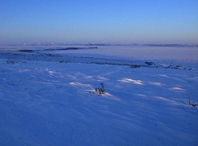 Alaska Tundra